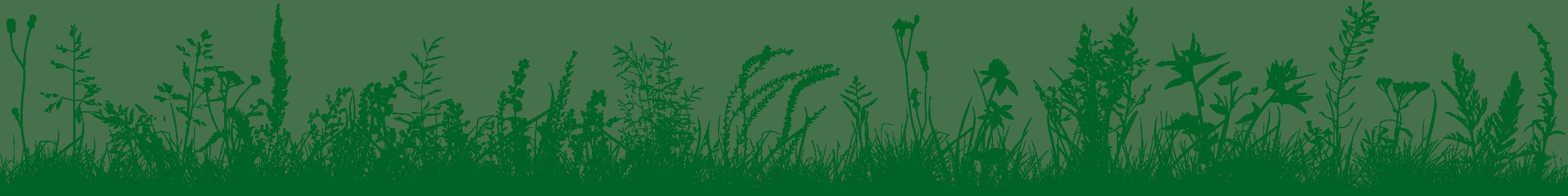 connemara meadow art 006225