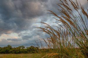 connemara meadow clouds tall grasses