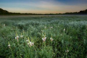 connemara meadow grasses