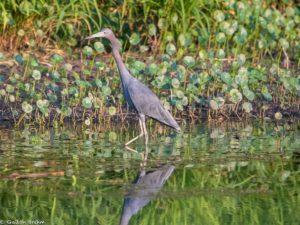 connemara meadow crane