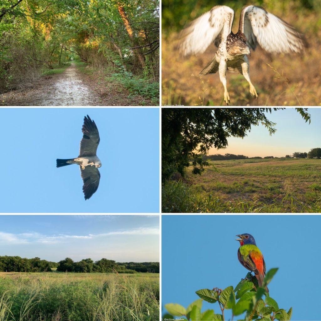 Connemara Meadow Bird Walks Aug 2021