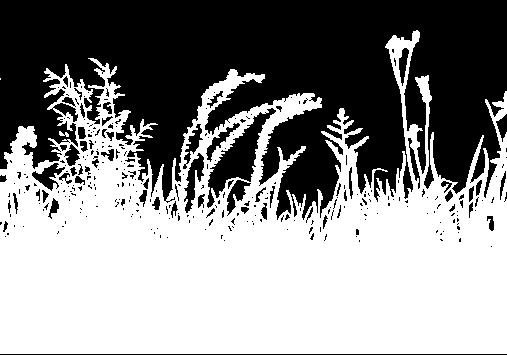 connemara meadow art 2